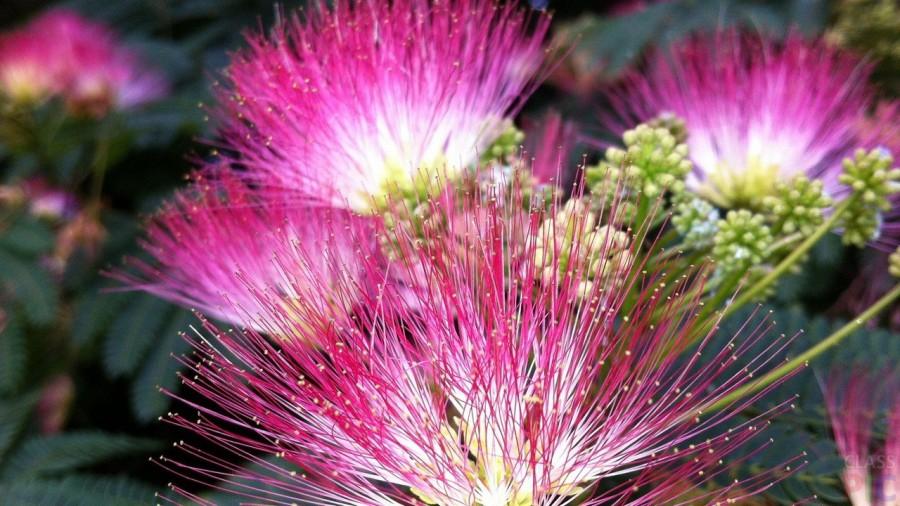 YArkie-tsvety-mimozy.jpg